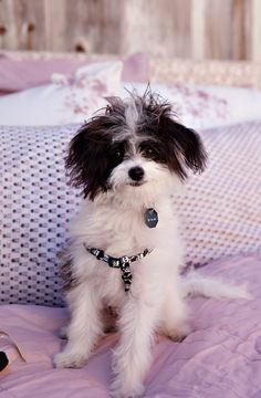 Even Toby can't resist the softness of Kerry Cassill Bedding. Spring 1 Collection is here! shop.kerrycassill.com