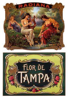 Radiana Flor de Tampa