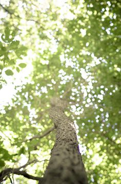 the shade of a tree Porch Lighting, Walk In The Woods, Green Garden, Tree Of Life, Ciel, Mother Earth, The Great Outdoors, Countryside, Nature Photography