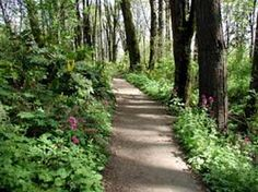urban hiking in portland, oregon's forest park.