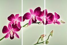 Aloha Orchids Limited Edition Giclee by AnnaKeayFineArt on Etsy