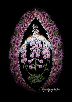 Foxglove (Digitalis pupurea)