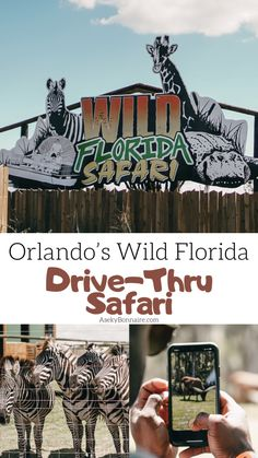 Wild Florida: Orlando Drive-Thru Safari. You can drive your own car through 85 acres of land to see over 100 native and exotic animals. Clearwater Florida, Sarasota Florida, Old Florida, Florida Vacation, Florida Travel, Orlando Florida, Florida Beaches, Central Florida, Orlando Entertainment