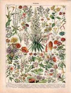 1897 Garden Flowers Antique Botanical Print Flower di Craftissimo