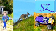 Kangaroo look at the radio-controlled car 🍄 Large mushrooms