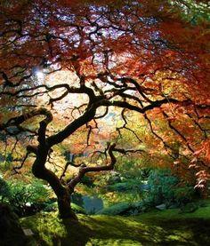 The Japanese Garden - Portland Oregon - Pixdaus