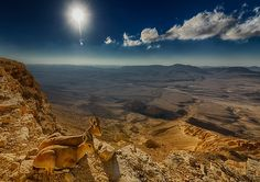 A pair of young Ibex are camouflaged in Ramon Crater, Israel photo by Ido Meirovich