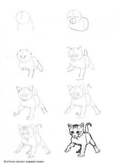 Как рисовать котёнка: схема № 4