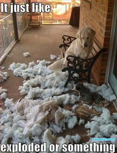 What Just Happened? #humor #lol #funny