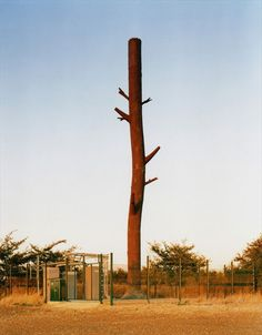 teléfono celular torre de tronco de árbol