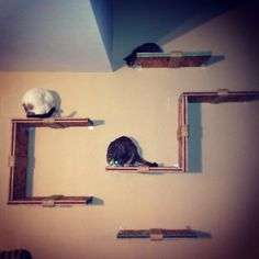 Cat Shelves. (Drill holes through some so kitties can play)