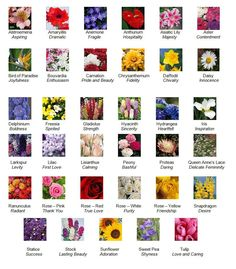 Flower Descriptions And Their Meanings | ... in Tallahassee Florida | Esposito > Florist > The Language of Flowers
