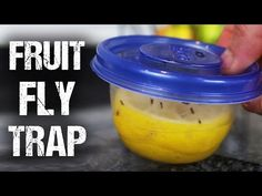 There are few ways to make a decent DIY fruit fly trap, but this one also adds a fresh lemon scent to your kitchen. All you need is a small plastic container and a lemon. Diy Cleaning Products, Cleaning Solutions, Cleaning Hacks, Diy Fruit Fly Trap, Summer Life Hacks, Small Plastic Containers, Insecticide, Fruit Flies, Fly Traps