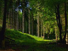 Heinrich Wilhelm: Die Sonne erhellt eine Lichtung - Leinwandbild auf Keilrahmen Leinwandbilder