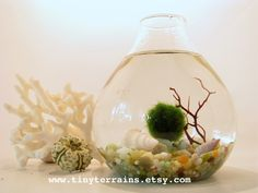 Marimo Moss Ball Teardrop Aquarium / Terrarium.  I have purchased aquariums from this seller and they are awesome!