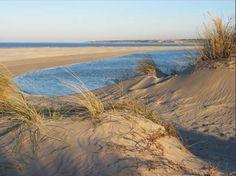 Le Touquet, les dunes.