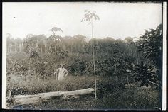 Man standing in a field with grasses and trees, possibly André Goeldi in Brazil | Flickr - Photo Sharing!