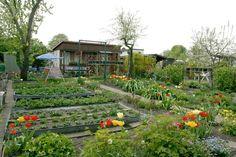 urban gardens | Urban Garden Casual » Berlin Gardens Threatened by Construction