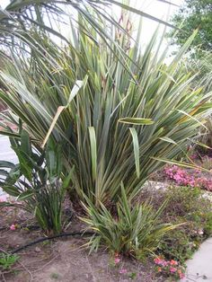 draught resistant plants | Drought Tolerant Plant: Flax | Apartment Therapy