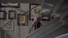 Trending GIF stairs the exorcist possessed exorcist linda blair regan regan macneil The Exorcist Book, Exorcist Movie, The Exorcist 1973, Horror Films, Horror Art, Horror Stories, Dark Gif, Linda Blair, Jennifer Carpenter