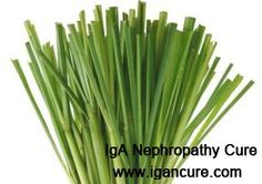 Is Lemongrass Good for Patients with IgA Nephropathy