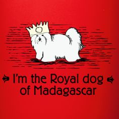 Royal Dog of Madagascar | Get Your Coton On