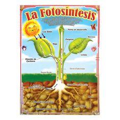 Lámina La Fotosíntesis -> http://www.masterwise.cl/productos/6-ciencias/26-lamina-la-fotosintesis