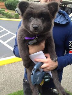 STAX | 17 pufók kutya, akik úgy néznek ki, mint a mackók
