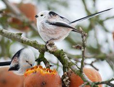 Good Federball Futterhaus Die V gel Kehren Schwanz Vogel Bird