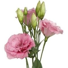 Lisianthus echo champagne (actually pink color) is a great substitute for roses.  They are one of our favorite new varieties we now grow in our hoophouse.   Ogden Botanical Gardens: Flower Sale