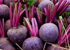 Planting, growing, and harvesting beet plants from The Old Farmer's Almanac gardeners Trellis Design, Winter Vegetables, Growing Vegetables, Growing Tomatoes, How To Store Beets, Winter Crops, Old Farmers Almanac, Bountiful Harvest, Gardens