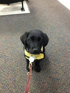 How is my guide dog in training my hero?