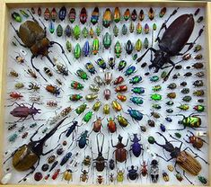 Beetle Collection. Poor little guys, use a camera next time or only take the cosmically recycled ones..