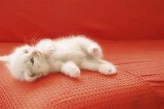 Cute Animals Cartoon Black And White Little Kittens, Kittens Cutest, Cats And Kittens, Cute Cats, Unique Animals, Animals And Pets, Funny Animals, Cute Animals, Pretty Cats