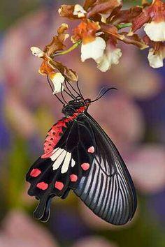 Muy linda mariposa