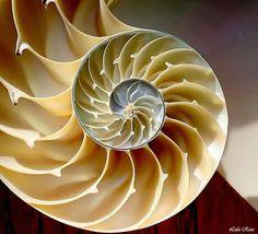 Fractales y Series de Fibonacci en la Naturaleza.- | Matemáticas.- | Scoop.it