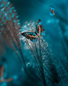 Photo by Alexandra Edit by me . Happiness is a butterfly, which when pursued, is always just beyond… Amazing Animal Pictures, Nature Pictures, Pretty Pictures, Butterfly Wallpaper, Of Wallpaper, Wallpaper Backgrounds, Wild Animals Photography, Nature Photography, Photography Photos