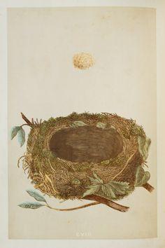 Robin Nest & Eggs Reverend Morris 1800s Original by PaperPopinjay