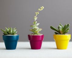 The plants we used for the @Man Repeller's office are from @Jeff Sill
