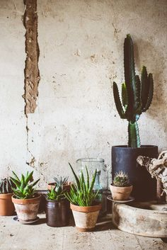 Cactus e suculentas Cacti And Succulents, Planting Succulents, Planting Flowers, Cactus Plante, Pot Plante, Outdoor Plants, Outdoor Gardens, Plants Are Friends, Home And Deco