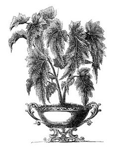 *The Graphics Fairy LLC*: Victorian Garden Graphics - Potted Plants in Urns