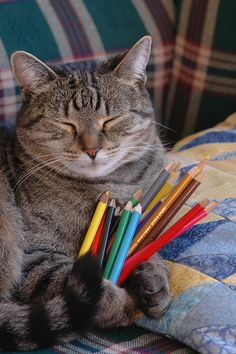 Artist kitteh meditates on next creation  (Flickr - Photo Sharing)