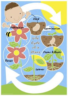 Review the main features of the life cycle of a plant with this cute mini poster.