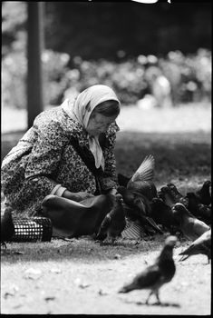 Negative, black and white, woman feeding pigeons in Hyde Park, for the book 'Sydney, A Book of Photographs', 35mm acetate film, David Mist, Sydney, New South Wales, Australia, 1969 - MAAS Collection