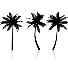 Palm tree graphics vector