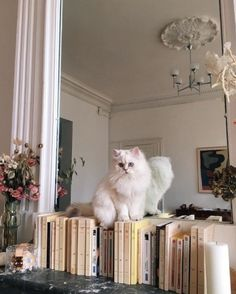 Crazy cat lady, crazy cats, i love cats, cat aesthetic, aesthetic grunge Crazy Cat Lady, Crazy Cats, I Love Cats, Cute Cats, Adorable Dogs, Funny Cats, Cat Aesthetic, Aesthetic Grunge, Cutest Animals
