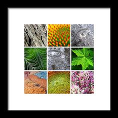 Nature Patterns And Textures Square Collage Framed Print by Christina Rollo.  All framed prints are professionally printed, framed, assembled, and shipped within 3 - 4 business days and delivered ready-to-hang on your wall. Choose from multiple print sizes and hundreds of frame and mat options.