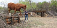 Rumor down Etwas niedriger und man könnte das Pferd hinauf- und hinab klettern lassen.