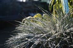 Striking foliage plants make for winter garden interest.