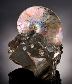 Ammonite with Mother of Pearl